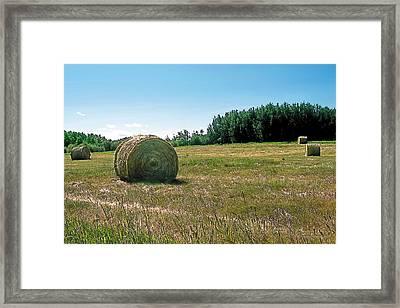 Summer Hay Framed Print by Terry Reynoldson