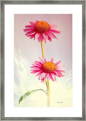 Summer Impressions Cone Flowers Framed Print by Bob Orsillo