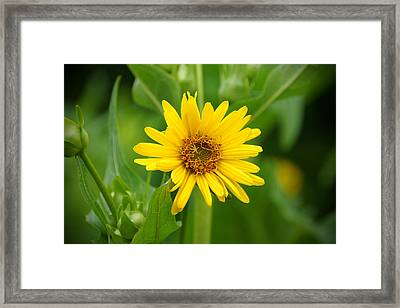 Summer In Bloom Framed Print by Thomas Fouch