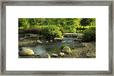 Summer In Forest Park Framed Print