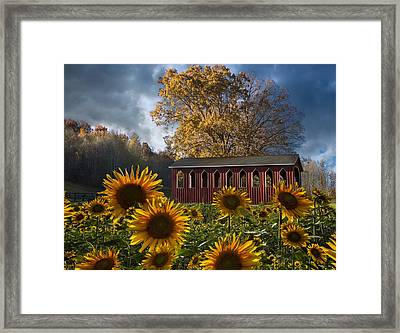 Summer In Sunflowers Framed Print