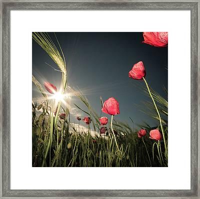 Summer Is Here Framed Print by Petra Dvorak