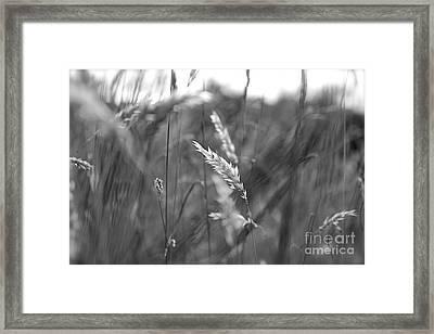 Summer Framed Print by Jay Nodianos