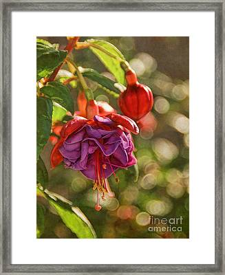 Framed Print featuring the photograph Summer Jewels by Peggy Hughes