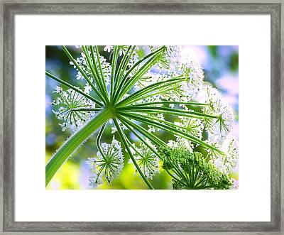 Summer Lace Framed Print