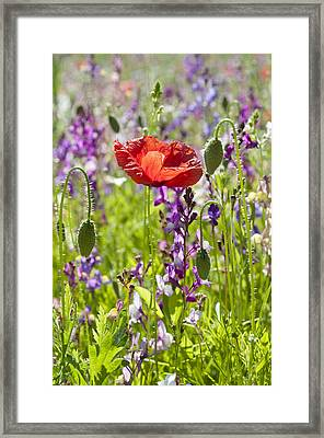 Framed Print featuring the photograph Summer by Lana Enderle