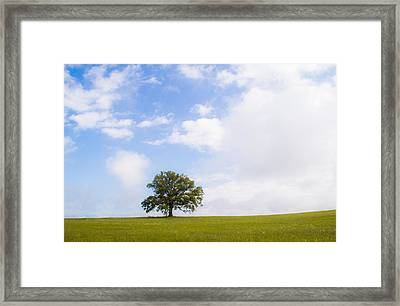 Summer Landscape Framed Print by Shelby  Young
