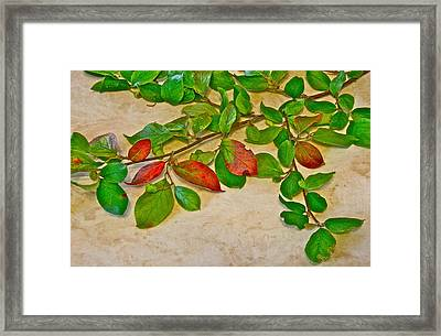 Summer Leaves Framed Print