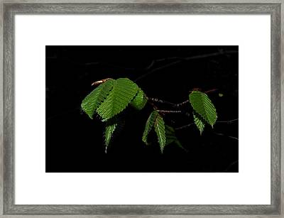 Summer Leaves On Black Framed Print
