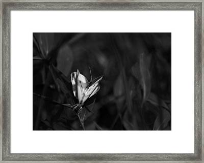 Summer Love Framed Print by Rebecca Sherman