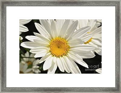Summer Love Framed Print