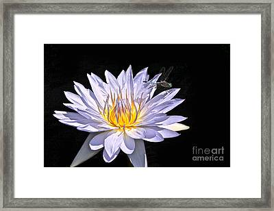 Summer Magic -- Dragonfly On Waterlily On Black Framed Print