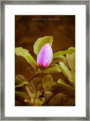 Summer Magnol Framed Print by Sonali Gangane
