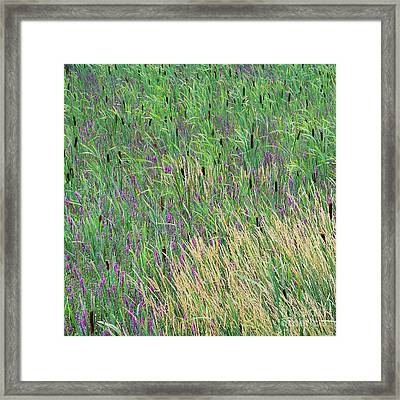 Framed Print featuring the photograph Summer Marsh by Alan L Graham