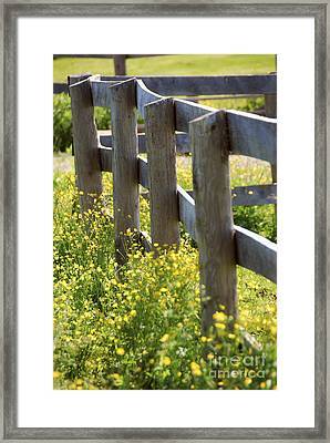 Summer Meadow Framed Print by Elena Elisseeva