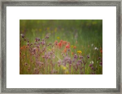Framed Print featuring the photograph Summer Meadow by Ellen Heaverlo