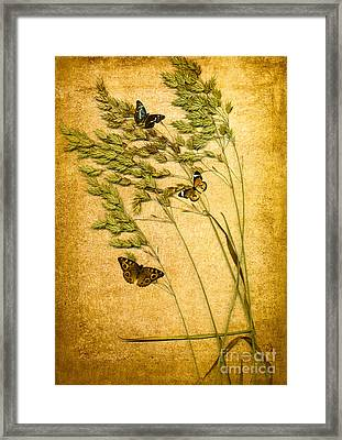 Summer Meadow Framed Print by Jan Bickerton