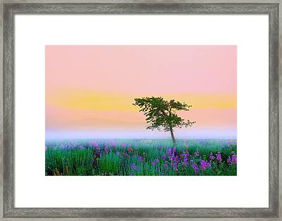 Summer Mood Framed Print