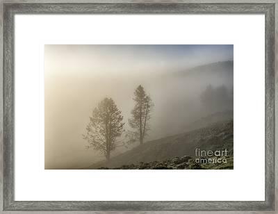 Summer Morning In Yellowstone Framed Print by Sandra Bronstein