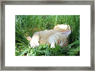 Summer Napping Framed Print
