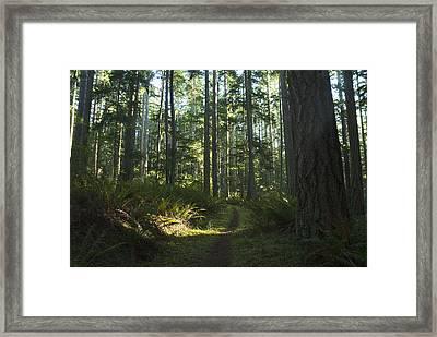 Summer Pacific Northwest Forest Framed Print