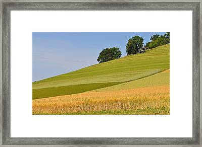 Summer Palette Framed Print by Felicia Tica