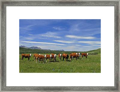 Summer Pastures Framed Print by Clay and Gill Ross