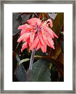 Framed Print featuring the photograph Summer Rain In Maryland by Emmy Marie Vickers