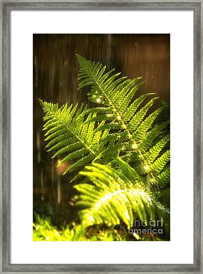 Summer Rain Framed Print by Jane Rix