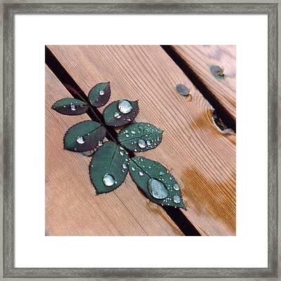 Summer Rain Framed Print by Stephen Prestek
