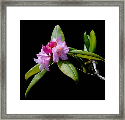 Summer Rhododendron Framed Print