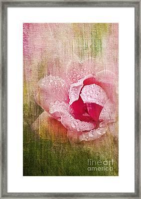 Summer Rose #2 Framed Print by Betty LaRue