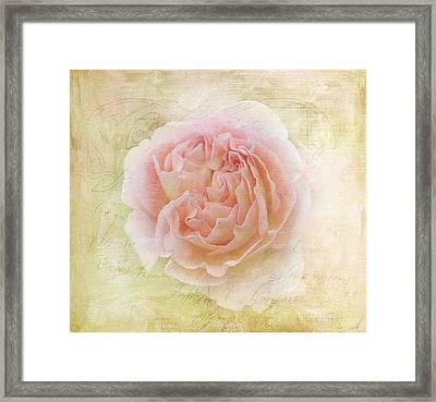 Summer Roses Framed Print