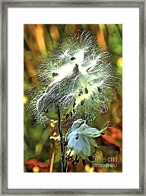 Summer Seeds - Milkweed Framed Print