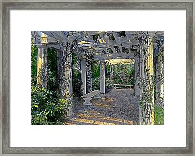 Summer Shade 3 Framed Print by Terry Reynoldson