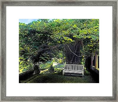 Summer Shade 4 Framed Print by Terry Reynoldson