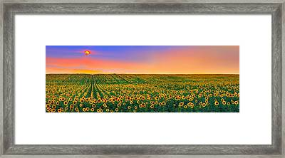Summer Slumber Framed Print