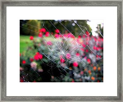 Summer Snowflake Framed Print
