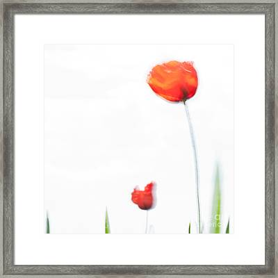 Summer Song Framed Print by Uma Wirth