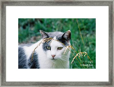 Framed Print featuring the photograph Summer Stroll by Donna Brown