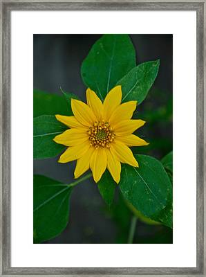 Summer Sun Framed Print by Elmer Baez