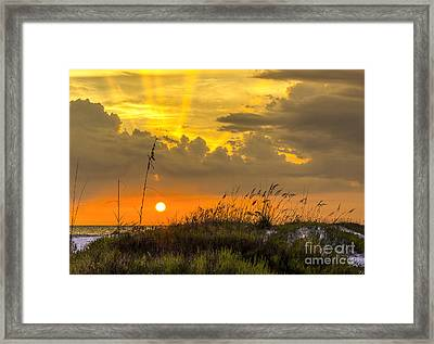 Summer Sun Framed Print by Marvin Spates