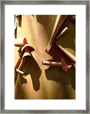 Summer Sun On Arbutus Framed Print by Cheryl Hoyle