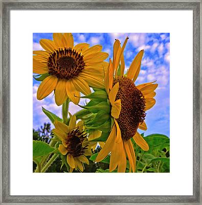 Summer Suns Framed Print
