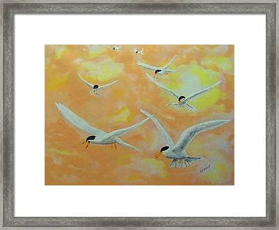 Summer Terns Framed Print by Rich Mason