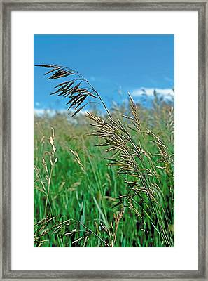 Summer Framed Print by Terry Reynoldson