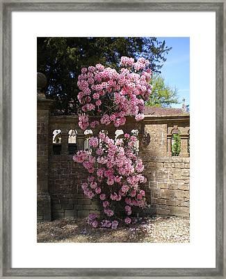 Summer Time Framed Print by Ann Fellows