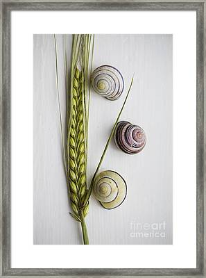 Summer Treasures Framed Print by Jan Bickerton