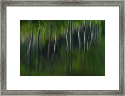 Summer Trees Framed Print by Karol Livote