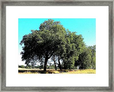 Summer Trees Framed Print by Tobeimean Peter